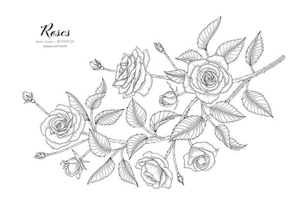 장미 꽃과 잎 손으로 그린 식물 삽화가 라인 아트로 그려져 있습니다.