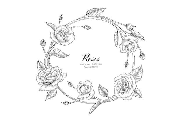 バラの花と葉の手描きの植物画と線画。