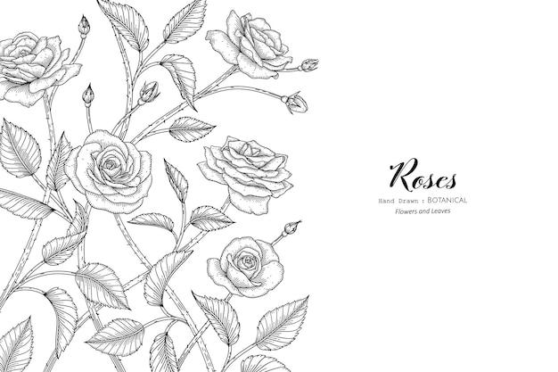 Розы цветок и лист рисованной ботанические иллюстрации с линией искусства.