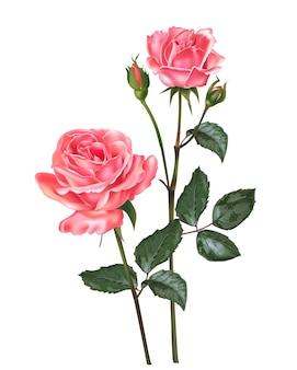 장미 꽃 벡터