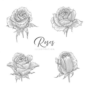 Roses illustration set