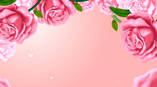 Roses in the pink background