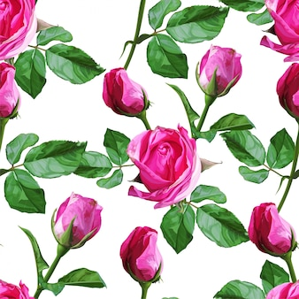 Roses seamless pattern on white background