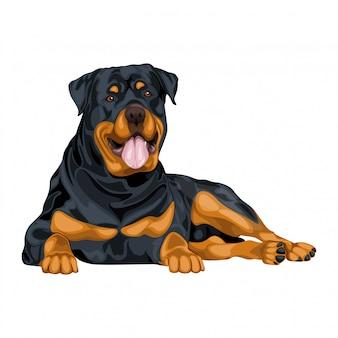 ロットワイラー犬のイラスト