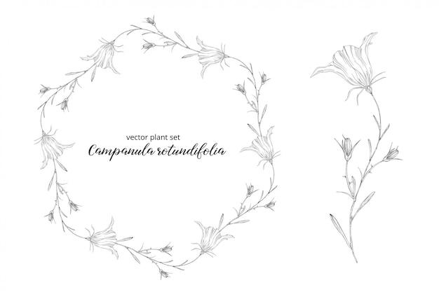 カンパニュラrotundifoliaの花輪