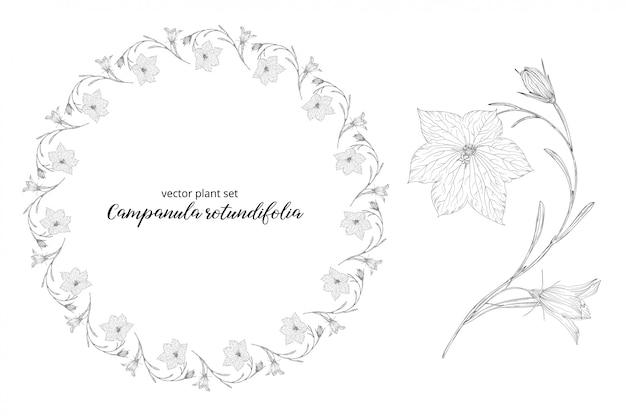 カンパニュラrotundifoliaの野菜セット