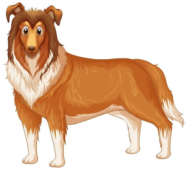 白い背景のラフコリー犬の漫画