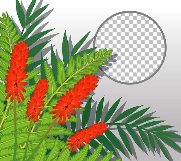 赤い花と葉のテンプレートで透明な丸いフレーム