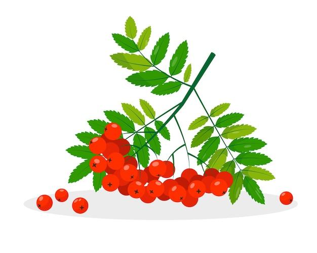 Рябина с красными ягодами и листьями