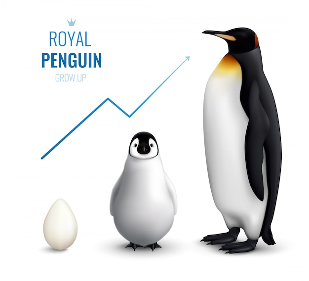 Royal penguins life cycle realistic  with egg chick adult and indicating growth up arrow