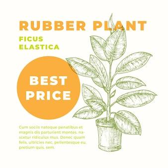 고무 식물 추상 기호 또는 레이블 템플릿. 현대 타이포그래피 홈 원예 카드와 손으로 그린 화분 ficus sillhouette. 관엽 식물 광고 엠블럼 또는 패키지 라벨.