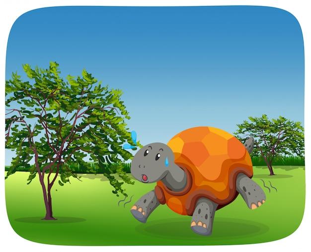 Running turtle in nature scene