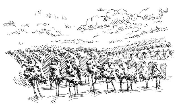 ブドウ畑と丘のある田園風景。ヴィンテージベクトルハッチング黒モノクロイラスト。白い背景で隔離。手描きデザイン