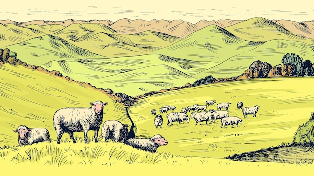 田舎の牧草地。牛、丘、農場のある村の風景。