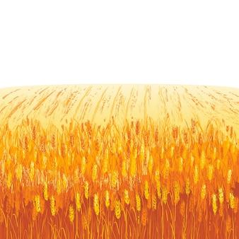 Rural summer landscape a field of ripe wheat on hills