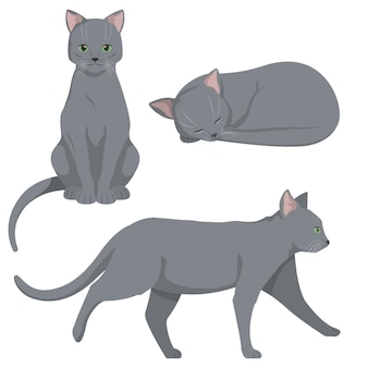 다른 포즈에 러시아 파란 고양이입니다. 만화 스타일의 아름다운 애완 동물.