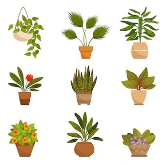 家の装飾的な植物のsセット