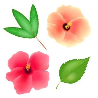 白い背景のスーダンのバラの花。ローゼルまたはsabdariffaハイビスカスの葉。リアルなイラスト。