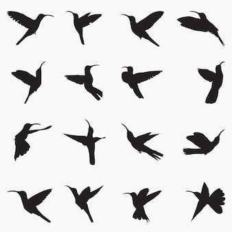 Sabrewing silhouettes illustration