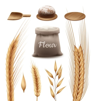 Sack of flour with wooden shovel and tray with fresh loaf bread and wheat, barley, oat and rye isolated on white background