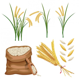 Sack of paddy ears and rice vector set