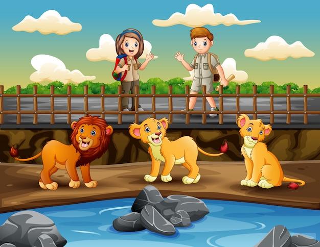 Девушка и мальчик сафари смотрят львов в зоопарке