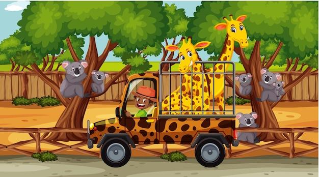케이지 카에 기린 두 마리가 있는 사파리 장면