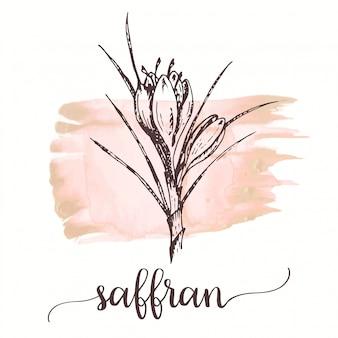 Saffron flower sketch hand drawn ink illustration