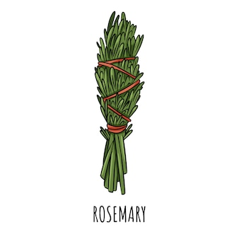 Sage smudge stick hand-drawn doodle isolated illustration. rosemary herb bundle