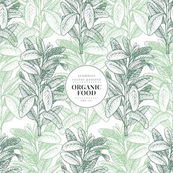 Sage. vector seamless pattern for design menu, packaging and recipes.