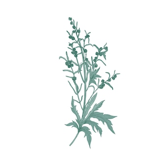 白で分離されたヤマヨモギの花