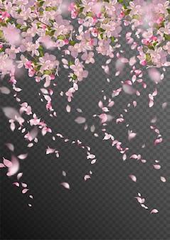 떨어지는 꽃잎과 흐린 투명 요소가있는 봄 날의 사쿠라 지점