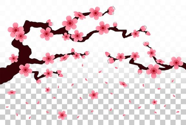 격리 된 배경에 사쿠라 떨어지는 꽃잎 벡터.