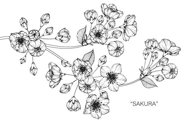 Сакура рисунок рисования рисунок.