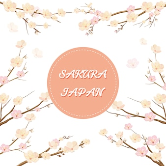 Sakura flower for invitation background etc