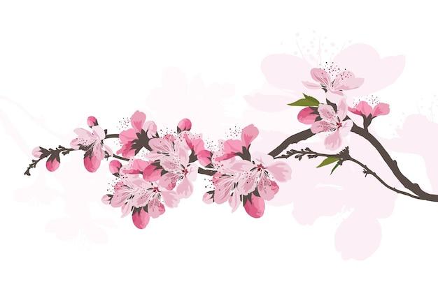 사쿠라 꽃 배경입니다. 벚꽃 격리 된 흰색 배경입니다.