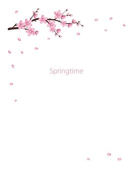 さくらの花セット桜の枝が咲きました春ピンク咲く構図
