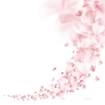 Sakura flying petals.