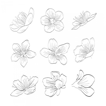 Sakura hand drawn collection