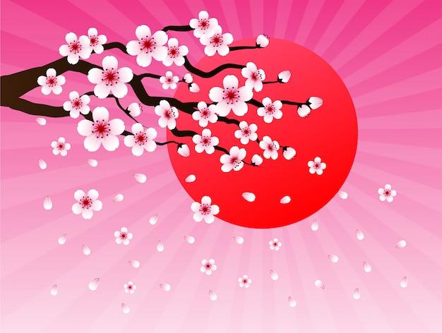 Sakura and sun background