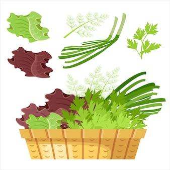 Salad greens in a basket.