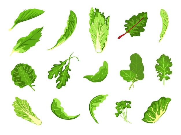 サラダの葉。緑の新鮮な農産物、レタス、キャベツ、ルッコラ、クレス、ケール。健康的なマイクログリーンの芽、有機葉野菜のベクターセットです。イラストサラダ野菜とベジタリアンの葉