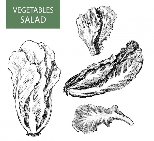 Salad - set of drawings