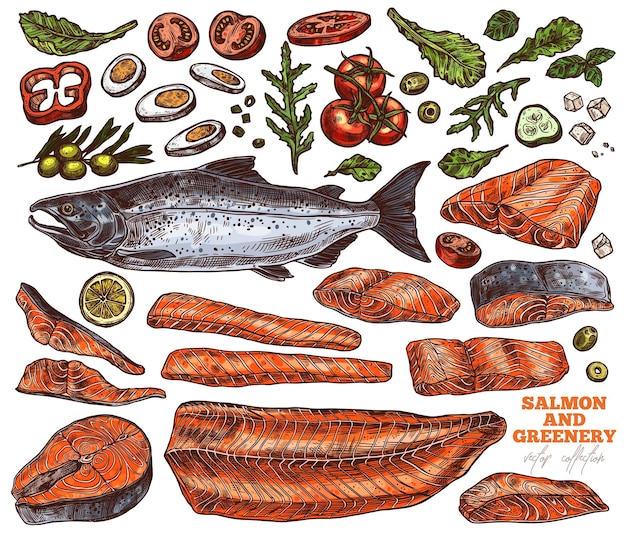 サーモンと緑の手描きイラストセット、生の未調理の赤い魚の切り身とステーキのカラースケッチパック、ゆで卵、トマト、レモンスライス