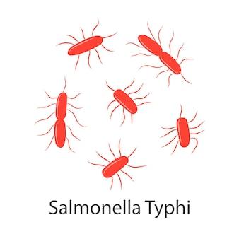 살모넬라 박테리아 다채로운 살모넬라 감염 그림 흰색으로 격리