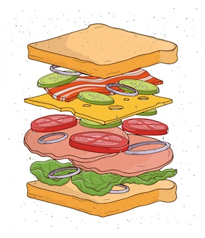 Sandwich concept ingredients. bread, salad, tomato, cheese, bacon, onion, colorful hand drawn   illustration.