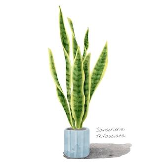Sansevieria trifasciata лист изолирован на белом фоне