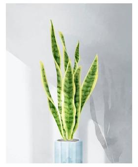 Sansevieria trifasciata leaf isolated on white background