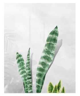 白い背景に隔離されたsansevieria zeylanica葉