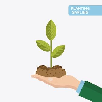 地面、土を手に苗木。植樹、栽培。緑の芽を持っている農夫、庭師
